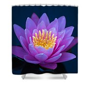Water Lily Of The Dawn Shower Curtain