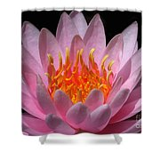 Water Lily On Fire Shower Curtain