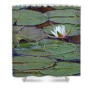 Water Lily Scene Shower Curtain