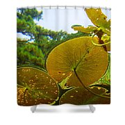 Water Lily Sky Shower Curtain