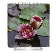 Water Lily With Bee Shower Curtain