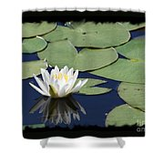 Water Lily With Black Border Shower Curtain