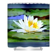 Water Lily With Blue Border - Digital Painting Shower Curtain