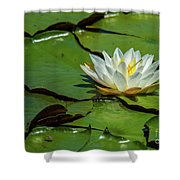 Water Lily With Friend Shower Curtain