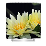 Water Lily Yellow Nymphaea Shower Curtain