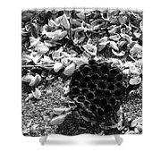 Water Lotus And Shells In Bw Shower Curtain