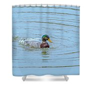 Water Off A Ducks Back Shower Curtain
