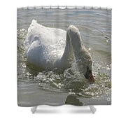 Water Off A Swan's Back Shower Curtain