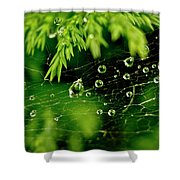 Water Orbs In Cobweb. Shower Curtain