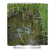 Water Pond Reflection In Peters Canyon Shower Curtain