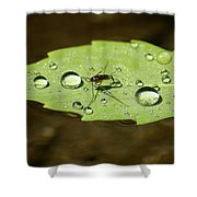 Water Strider Has A Drink At The Floating Leaf Cafe Shower Curtain
