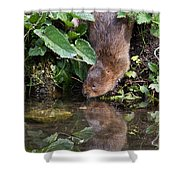 Water Vole Shower Curtain