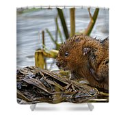 Water Vole Cleaning Shower Curtain