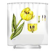 Watercolor Flower Yellow Tulip Shower Curtain