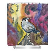 Watercolor - Gray Catbird Shower Curtain