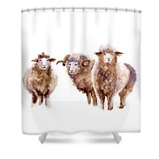 Watercolor Sheep Shower Curtain