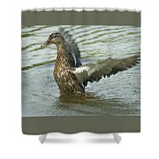 Watercovered Wingflapper Shower Curtain