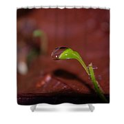 Waterdrop On A Litte Green Sprout  Shower Curtain