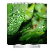 Waterdrops  Shower Curtain