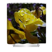 Waterdrops On A Pansy Shower Curtain
