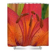 Watered Lily Shower Curtain