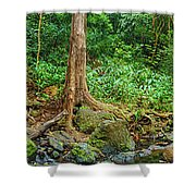 Waterfalls And Banyans Shower Curtain