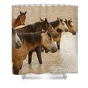Waterhole Band Shower Curtain
