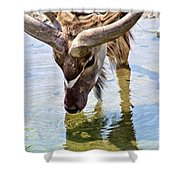 Watering Kudu Shower Curtain