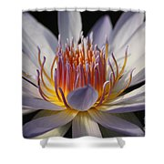 Waterlily Shower Curtain