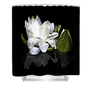Waterlily  Reflection Shower Curtain