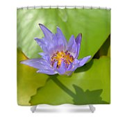 Waterlily Shadow Of Perfection Shower Curtain