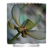 Waterlily Wash  Peekaboo Shower Curtain