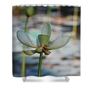 Waterlily Wash  Vertical Shower Curtain
