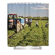 Watermelon Harvest Shower Curtain