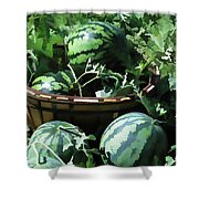 Watermelon In A Vegetable Garden Shower Curtain by Lanjee Chee