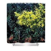 Wattyl - Wild Flower Of Australia Shower Curtain