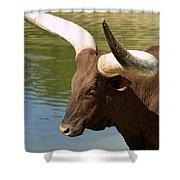 Watusi Bull Shower Curtain