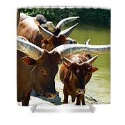 Watusi Cattle Shower Curtain