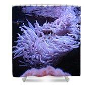 Waving Sea Anemone - Aquarium Shower Curtain