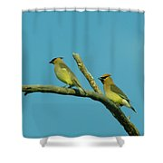 Wax Wings  Shower Curtain