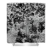 Waxleaf Privet Blooms On A Sunny Day In Black And White - Color Invert Shower Curtain