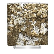 Waxleaf Privet Blooms On A Sunny Day In Sepia Tones Shower Curtain