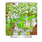 Waxleaf Privet Blooms On A Sunny Day Shower Curtain