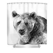 Wb Portrait Of A Bear Shower Curtain