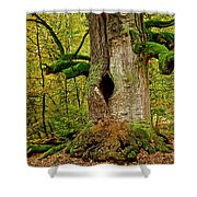 We Are Here Since 1000 Years 1 Shower Curtain