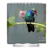 We Are Here Today And Gone Tommorrow Shower Curtain