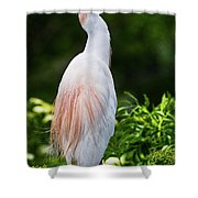 Wearing Spring Colors Shower Curtain