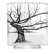 Weathered Old Tree Shower Curtain