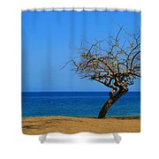 Weathered Tree Shower Curtain