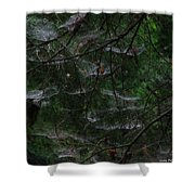 Webs Of A Tree Shower Curtain